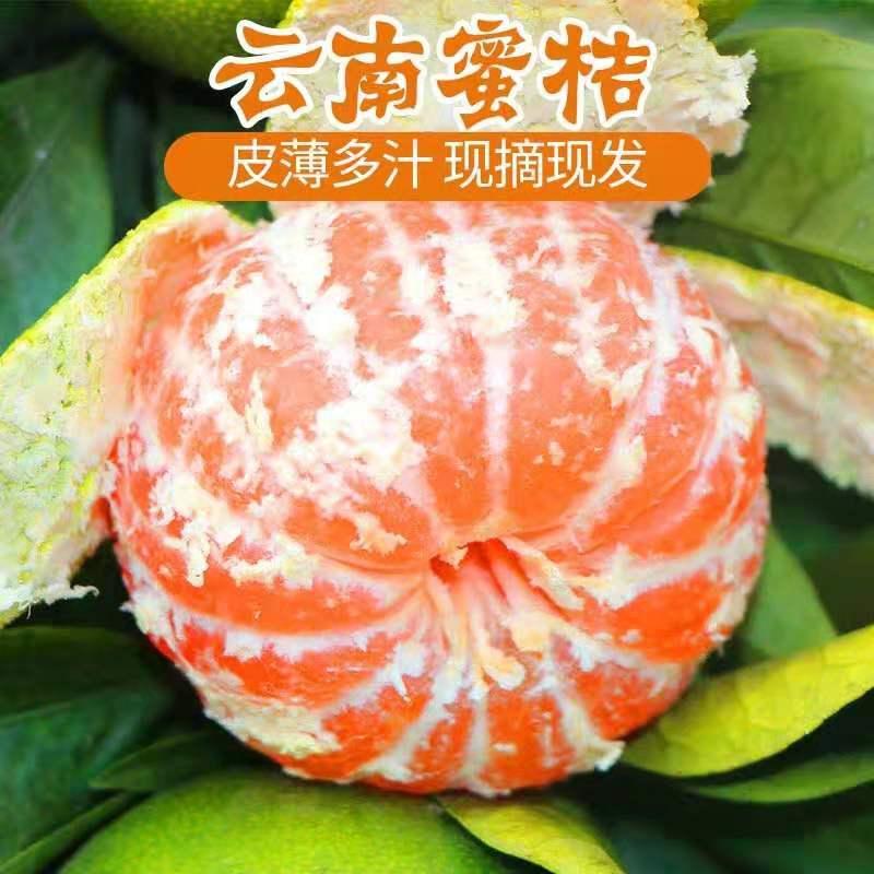 云南蜜桔5斤橘子薄皮 橘子青皮应季水果新鲜当季蜜桔早熟绿皮柑橘